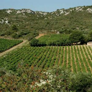Terrains à vendre Roquefort Les Corbières 3