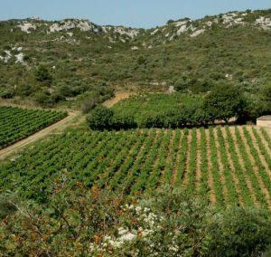 Roquefort des Corbières – Le Clos Saint Martin